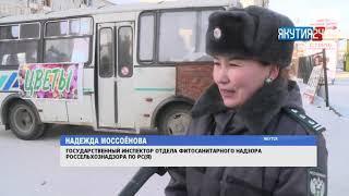 В Якутске проверяют подарочные цветы на наличие вредителей