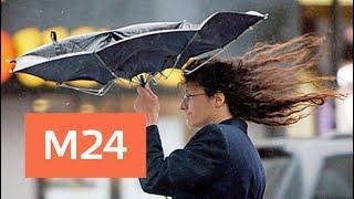 Усиление ветра ожидается в Москве в ближайшие часы - Москва 24