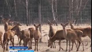На ферме в Краснознаменском районе найдено 20 туш мёртвых оленей