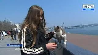 Бездомная кошка из Арсеньева прославилась на всю страну