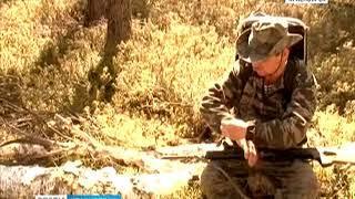 В крае начинается обработка леса от сибирского шелкопряда