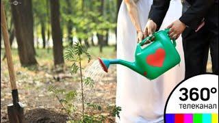 Одинцовские молодожены сажают деревья возле ЗАГСа