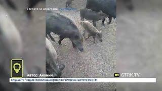 Мобильный репортёр - 09.07.18