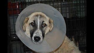 Этот пёс стал жертвой ДТП, а точнее, жертвой очередного предательства.