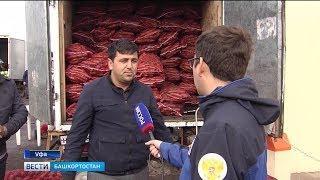 Как башкирским фермерам пробиться в крупные торговые сети: специальный репортаж «Вестей»