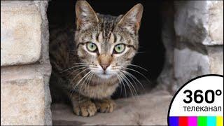 Жильцы дома на Каширском шоссе спасли кошек, замурованных в подвале