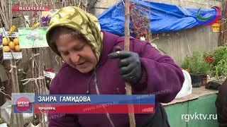 Россельхознадзор проверяет качество семян и саженцев в Дагестане