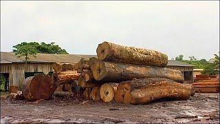 Леса Амазонки: точка невозврата