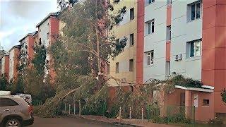 В Ханты-Мансийске сильный ветер повалил деревья