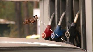 Пензенские водители возмущены ежедневным ростом цен на бензин