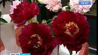 50 сортов пионов представили садоводы на выставке в Иркутске