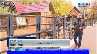 Жители зоопарка Саранска не будут голодать этой зимой