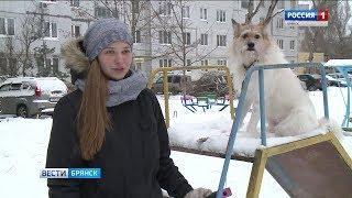 Символ 2018 года - собака вступила в свои права