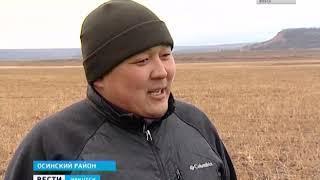 Лучшими овцеводами области стали аграрии из села Обуса Осинского района
