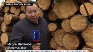 Санитарная или незаконная рубка Заготовители и местные жители конфликтуют в Баяндаевском районе