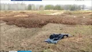 В Курагинском районе местные жители обнаружили огромный скотомогильник