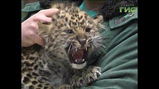 Лошади Пржевальского и малыши леопардов - в самарском зоопарке пополнение