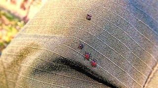 Нынешнее лето в Югре бьёт рекорды по количеству клещей