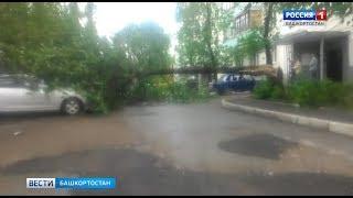 На улице Зорге в Уфе дерево упало на автомобиль