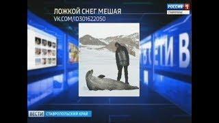 """""""Вести в сети"""". Выпуск #202"""