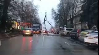 В центре Ставрополя дерево повисло на проводах