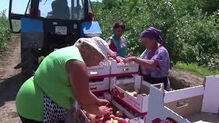 Глава Ставропольского края Владимир Владимиров поздравил работников сельского хозяйства