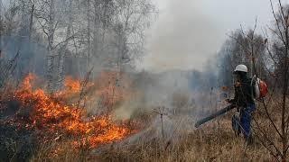 Экология и мы. Лесные пожары