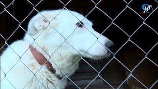 Зоозащитники, общественники и полицейские обсудили проблему бездомных животных