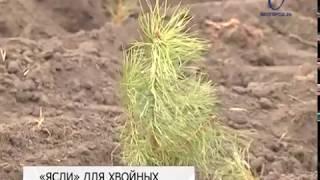 «Белгорблагоустройство» расширяет питомник хвойных растений