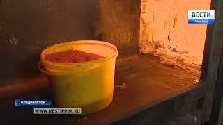 Во Владивостоке сожгли партию красной икры