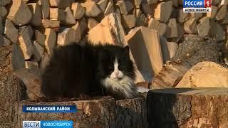 Жители Новосибирской области готовятся к весеннему паводку
