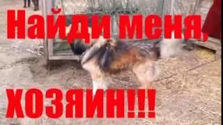 В ярославской гимназии № 3 подвели итоги городского конкурса-акции «Поможем животным вместе»