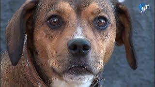 Брошенная у ветклиники собака Найда ждет новых хозяев
