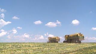 В Мордовии началась уборка зелёного горошка