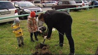В Нижневартовске семьями высаживают кедровые аллеи