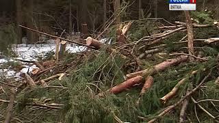 Кировчане обеспокоены вырубкой леса в Порошино(ГТРК Вятка)