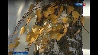 Синоптики обещают заморозки: на Дону резко похолодает уже в эти выходные