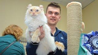Мурчащая выставка: в Ханты-Мансийске прошли соревнования кошек