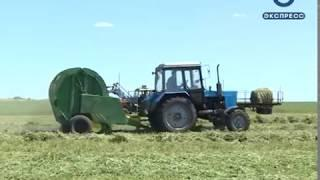 В Неверкино запаслись кормовой травой на два года вперед
