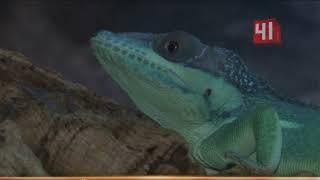 Таможня конфисковала редких рептилий