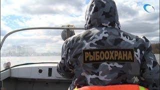 На реках и озерах Новгородской области вступили в силу ограничения на лов рыбы