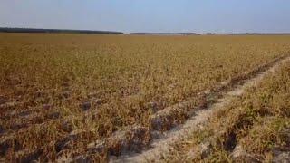 Власти Германии помогут фермерам
