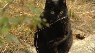 Кошку бросила хозяйка: как выживают бездомные животные на улицах Югры