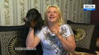 Собака победительница