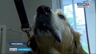 Собаки-терапевты пришли к выздоравливающим детям в Областной больнице