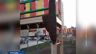 Ростовчане сняли на видео пчелиную семью на одной из детских площадок
