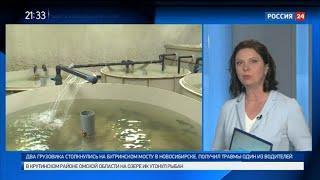 В водоемы Новосибирской области начали выпускать рыбу ценных пород