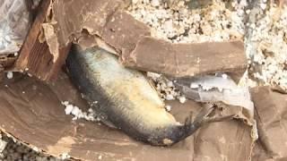 Свалка рыбы под Рязанью