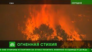 Новости Сегодня на НТВ Утренний Выпуск 11.11.2018