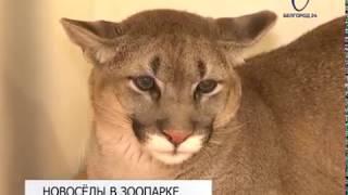 В Белгородском зоопарке появились новые обитатели